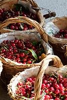Bando per la concessione di contributi alle imprese cerasicole IGP per la copertura dei frutteti